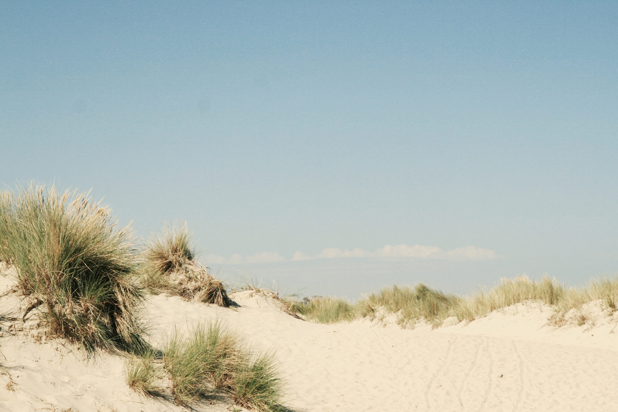 In de duinen op het strand